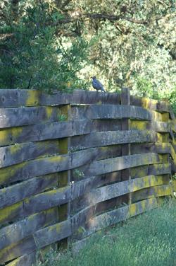 quailfence