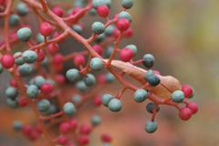 pistacheberries