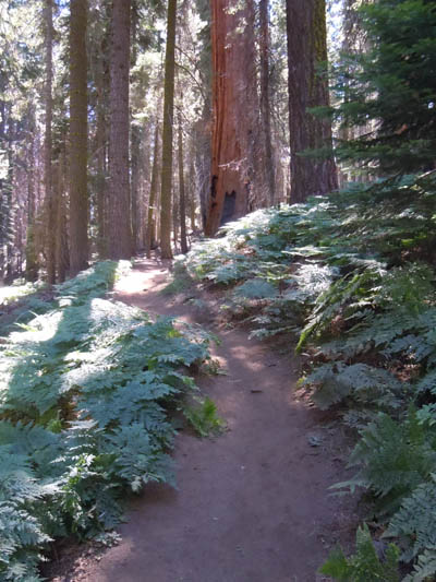 Crescent Meadow Trail, Sequoia National Park, photo © Elsah Cort from Cort Cottage Bed and Breakfast